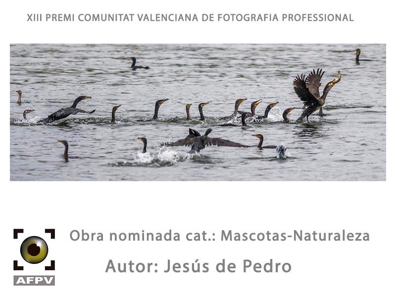 mascotas-naturaleza_004_jesus-de-pedro.jpg