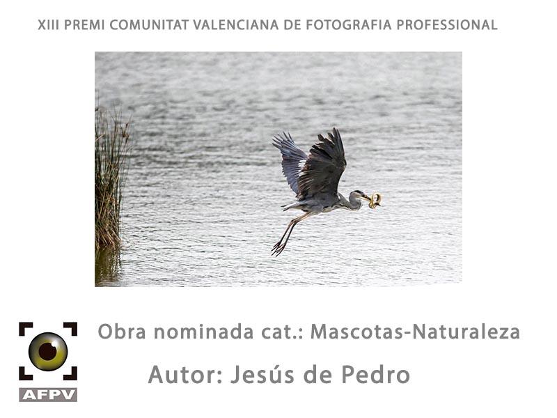 mascotas-naturaleza_jesus-de-pedro.jpg